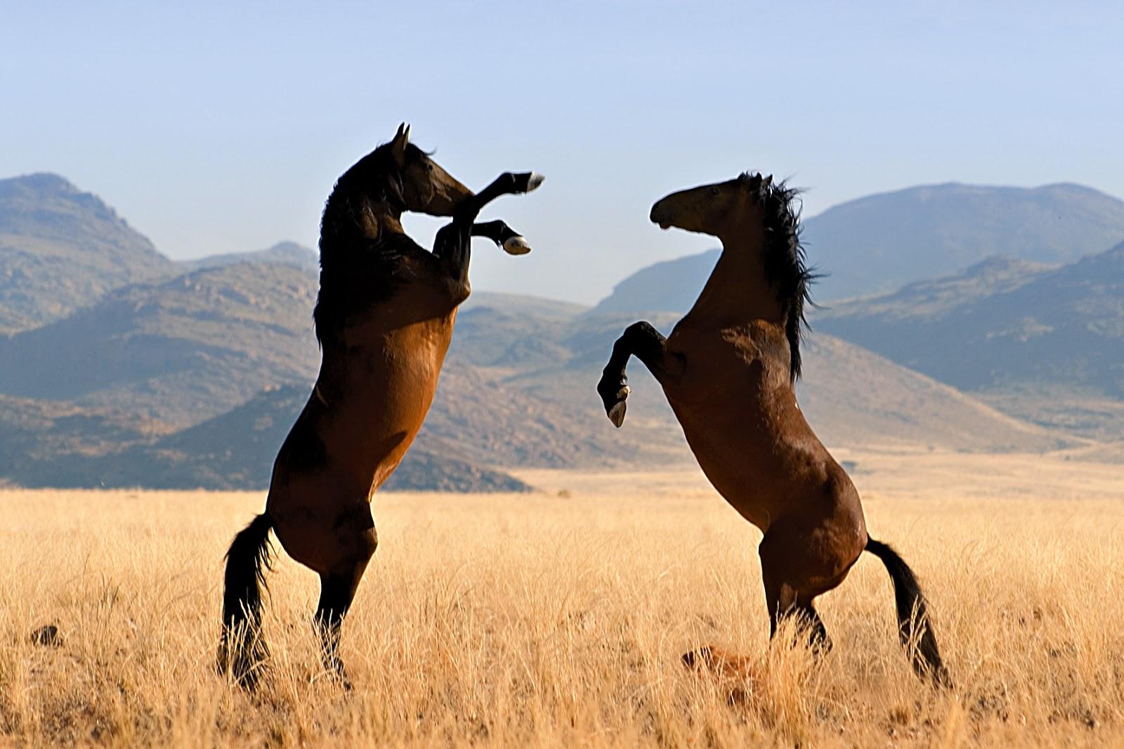 image Ride my wild horse whore big long cock dick