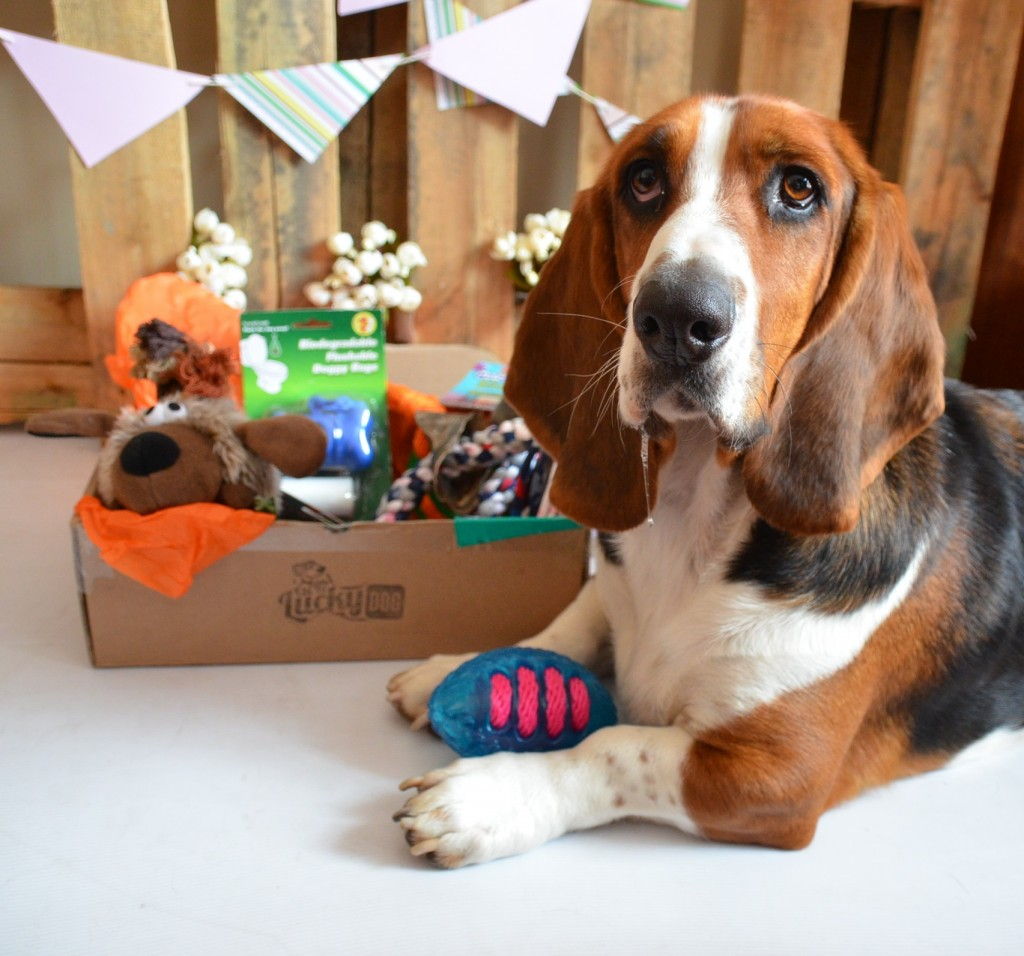 Everyone on social media especially Instagram has probably heard of subscription boxes. And many people have been howling over Lucky Dog Boxes, as more owner s sign up for these canine care packages. This is our Lucky Dog Box Review